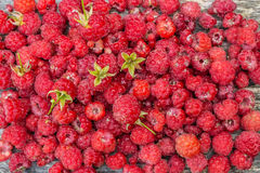 Delicious fresh raspberries. Scattered on the table Stock Images