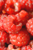 Delicious fresh raspberries Royalty Free Stock Photography