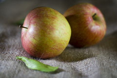 Delicious fresh red apples of seasonal Stock Images