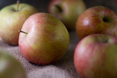 Delicious fresh red apples of seasonal Royalty Free Stock Image