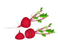 Delicious Fresh Red Beet on White Background Royalty Free Stock Photo