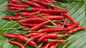 Delicious fresh red chillies on a green banana Stock Image