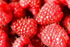 Delicious fresh raspberry background closeup. Delicious fresh red ripe raspberry background close up macro view Stock Photography