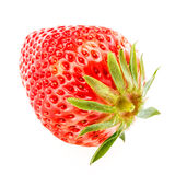 Delicious fresh red Strawberry fruits Royalty Free Stock Photo