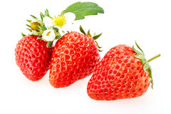Delicious fresh red Strawberry fruits Stock Images
