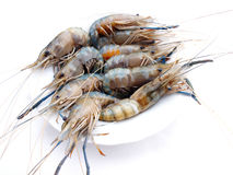 Delicious fresh shrimp seafood isolated in white. Fresh shrimp seafood isolated in white Royalty Free Stock Photography