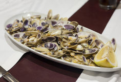 Delicious fresh steamed clams with lemon Royalty Free Stock Images