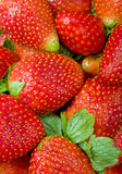 Delicious fresh strawberry  fruit  closeup Stock Images
