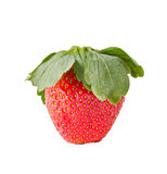 Delicious fresh strawberry  fruit macro Royalty Free Stock Photography