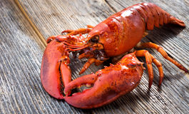 A delicious freshly boiled lobster Royalty Free Stock Photography