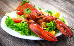 A delicious freshly boiled lobster Stock Photography