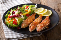 Delicious fried fish red mullet with fresh salad closeup. horizo Royalty Free Stock Images