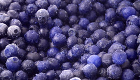 Delicious frozen wild blueberries Stock Photos