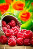 Delicious fruit berries Royalty Free Stock Image