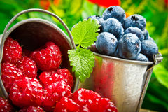 Delicious fruit berries Stock Images