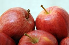 Delicious gala apples Stock Image