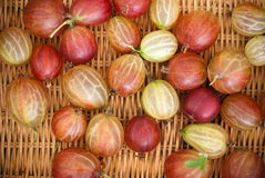 Delicious gooseberries from the garden. Gooseberries on a straw background Royalty Free Stock Photos