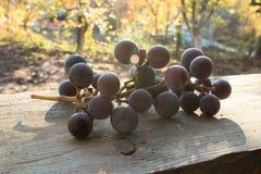 Delicious grape Stock Image