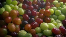 Mixed grapes in fine water mist. Delicious grapes in fine water spray stock footage