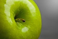 Delicious green apple macro Stock Photography