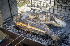 Delicious grilled fish Royalty Free Stock Photo