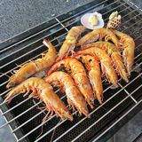 Delicious grilled king prawns. Ten delicious grilled king prawns Royalty Free Stock Image