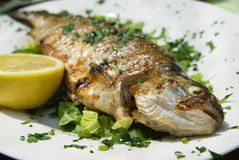 Delicious grilled trout on a plate Royalty Free Stock Images