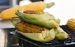 Delicious Grilled Turkish Corn. For sale. Closeup, isolated Royalty Free Stock Image