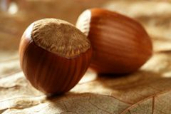 Delicious hazelnuts, macro detail Stock Image