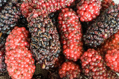 Delicious and healthy boysenberry. Close up of delicious red and black boysenberries stock photos