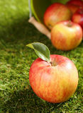 Delicious healthy fresh apple Royalty Free Stock Image