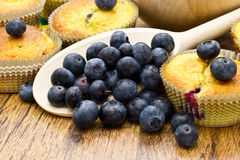Delicious homemade blueberry muffins with fresh blueberries Royalty Free Stock Photography