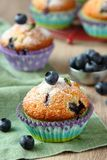 Delicious homemade blueberry muffins with fresh blueberries Royalty Free Stock Image