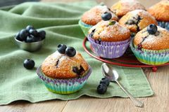 Delicious homemade blueberry muffins with fresh blueberries Royalty Free Stock Photo