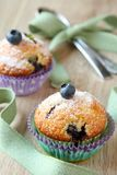 Delicious homemade blueberry muffins Royalty Free Stock Photography