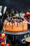 Delicious homemade chocolate cheesecake decorated with fresh che Stock Photography