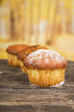 Delicious homemade muffin cake dessert cupcake Stock Photos