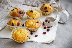 Homemade muffins with raisins on the burlap cloth. Delicious homemade muffins with raisins on the burlap cloth Stock Images