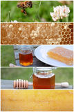 Delicious Honey Bee Collage Royalty Free Stock Photos