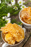 Delicious Honey comb and daisies Stock Images