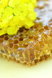 Delicious honey, honeycomb, delicate rapeseed flowers Royalty Free Stock Photography