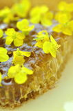 Delicious honey, honeycomb, delicate rapeseed flowers Royalty Free Stock Image
