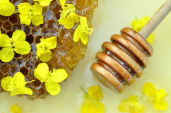 Delicious honey, honeycomb, delicate rapeseed flowers Stock Photos