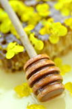 Delicious honey, honeycomb, delicate rapeseed flowers Royalty Free Stock Images