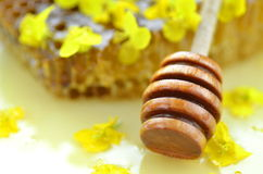 Delicious honey, honeycomb, delicate rapeseed flowers Stock Images