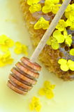 Delicious honey, honeycomb, delicate rapeseed flowers Royalty Free Stock Photo