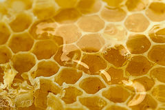 Delicious honeycomb close Royalty Free Stock Photos