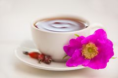 Delicious hot tea from red rosehip. On table Royalty Free Stock Photo