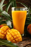 Delicious ,juicy mango smoothie. Delicious juicy smoothie with fresh Indian mangoes on earthy background with mango leaves Royalty Free Stock Photos