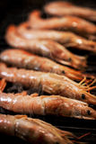 Delicious langoustines  on grill Royalty Free Stock Photo